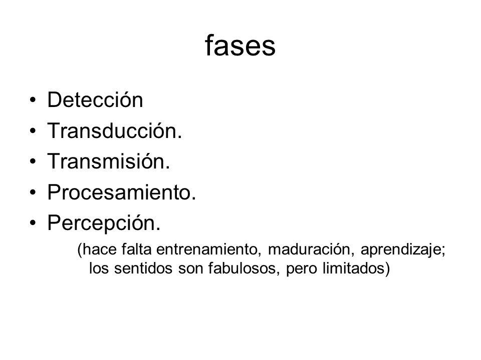 fases Detección Transducción. Transmisión. Procesamiento. Percepción.
