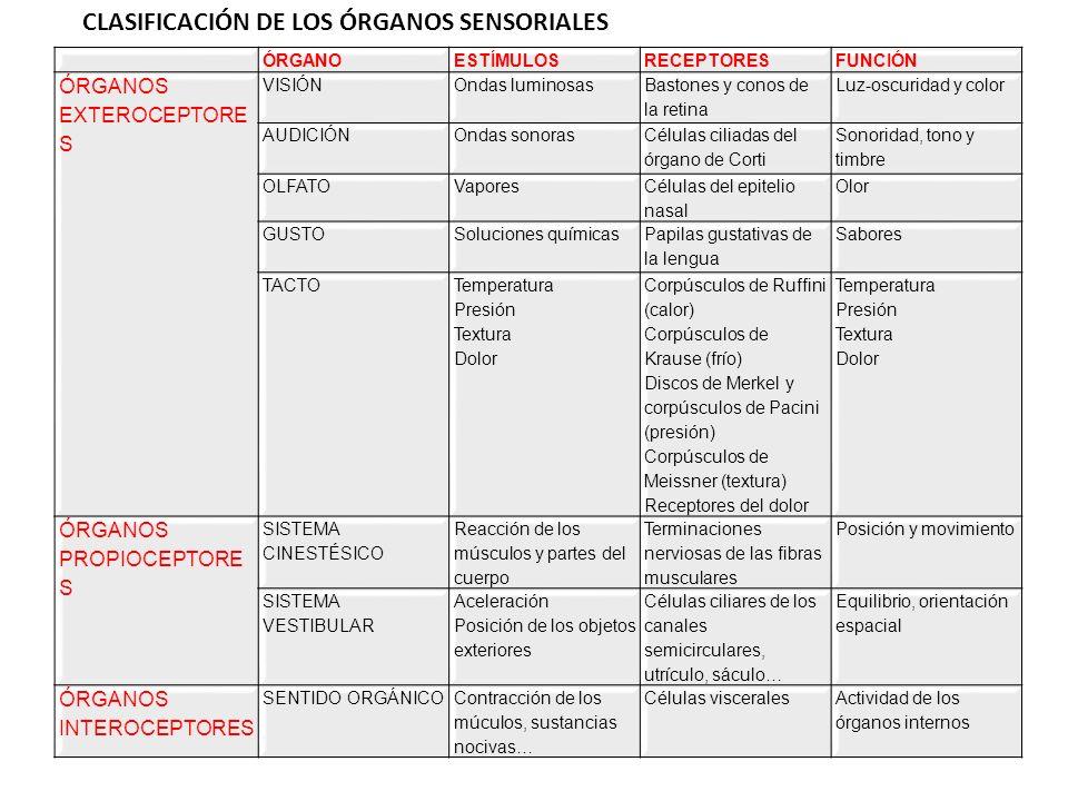 CLASIFICACIÓN DE LOS ÓRGANOS SENSORIALES