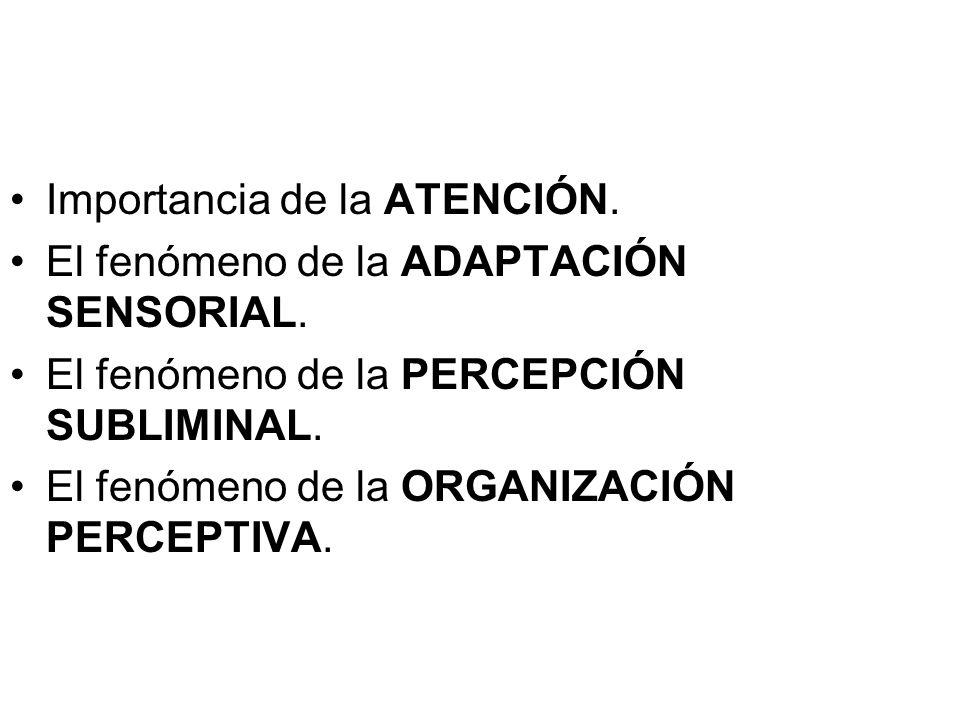 Importancia de la ATENCIÓN.