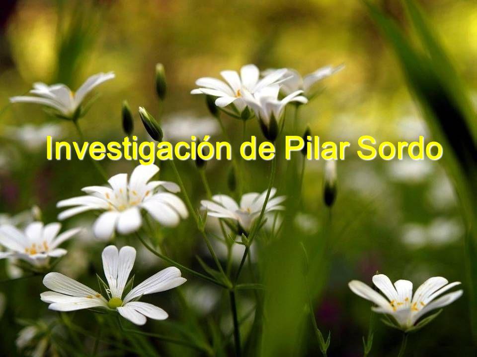 Investigación de Pilar Sordo