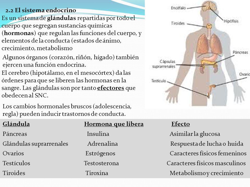 2.2 El sistema endocrino