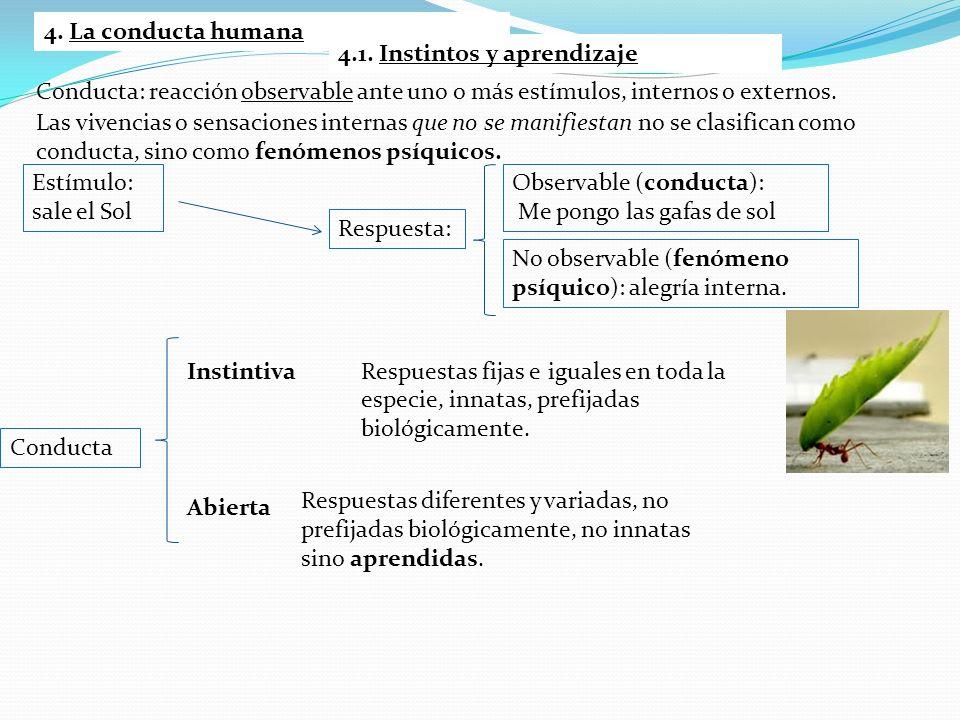 4. La conducta humana 4.1. Instintos y aprendizaje. Conducta: reacción observable ante uno o más estímulos, internos o externos.