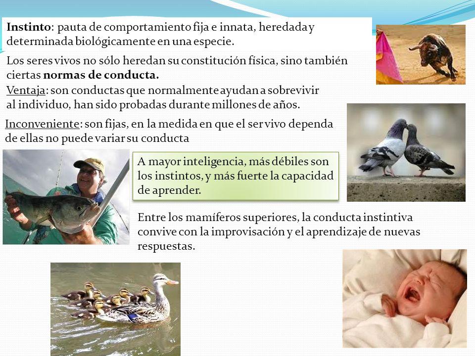 Instinto: pauta de comportamiento fija e innata, heredada y determinada biológicamente en una especie.