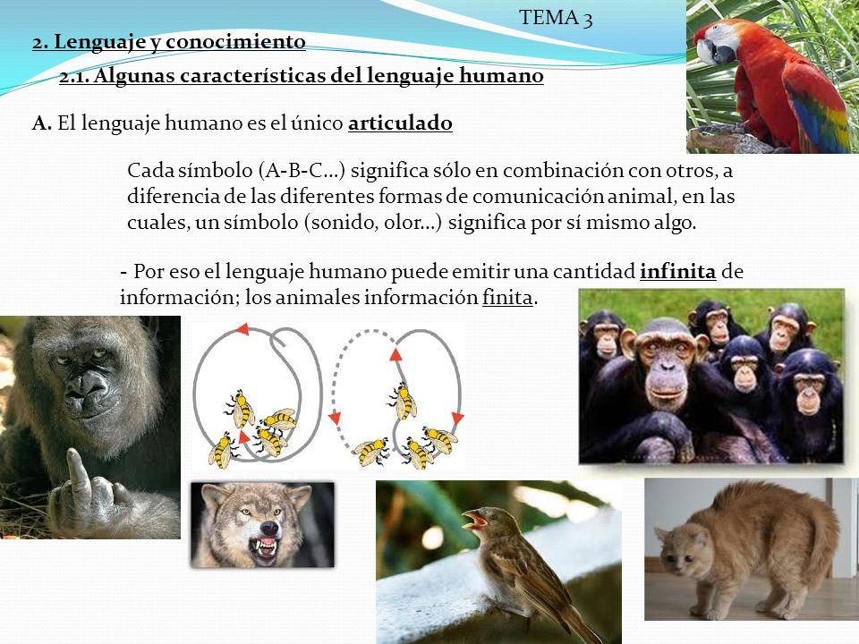 TEMA 3 2. Lenguaje y conocimiento. 2.1. Algunas características del lenguaje humano. A. El lenguaje humano es el único articulado.