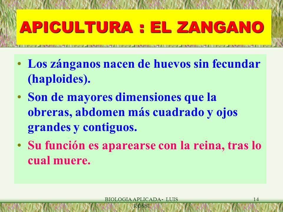 APICULTURA : EL ZANGANO