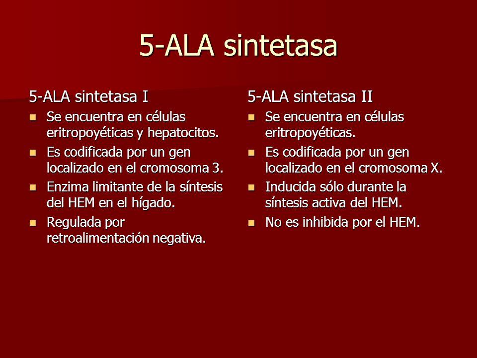 5-ALA sintetasa 5-ALA sintetasa I 5-ALA sintetasa II