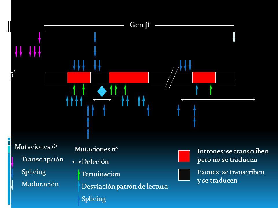 Gen  5' Mutaciones + Mutaciones 0 Transcripción