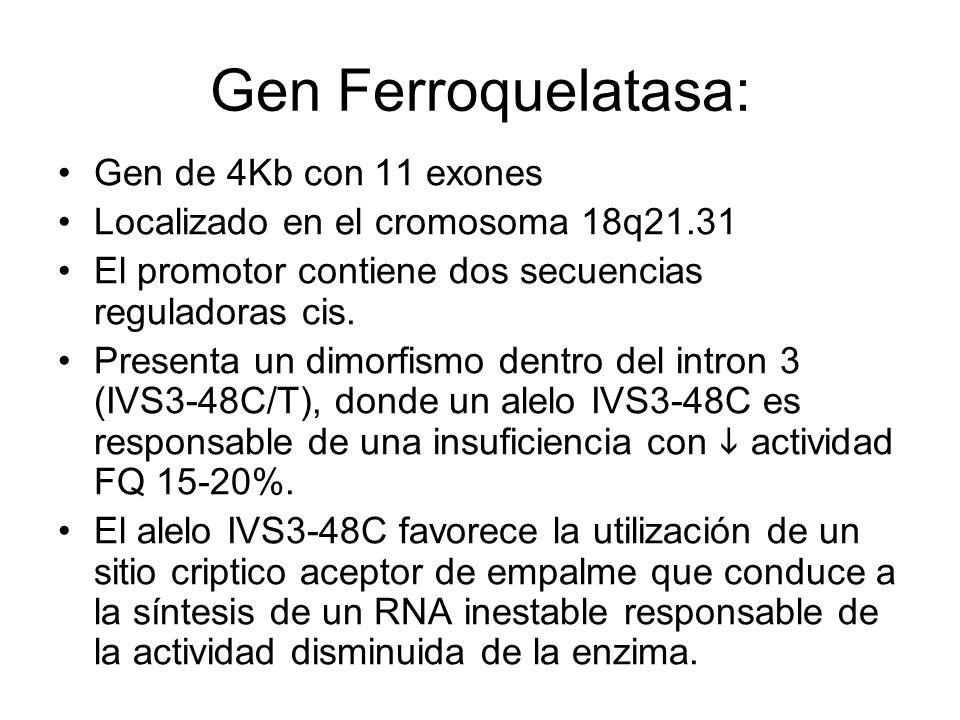 Gen Ferroquelatasa: Gen de 4Kb con 11 exones