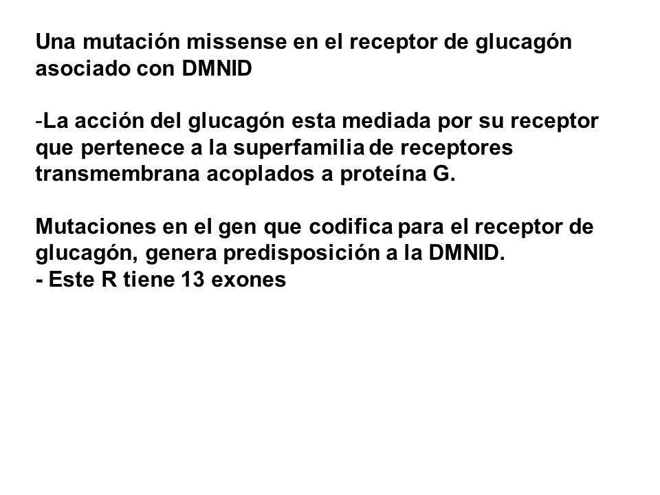Una mutación missense en el receptor de glucagón asociado con DMNID