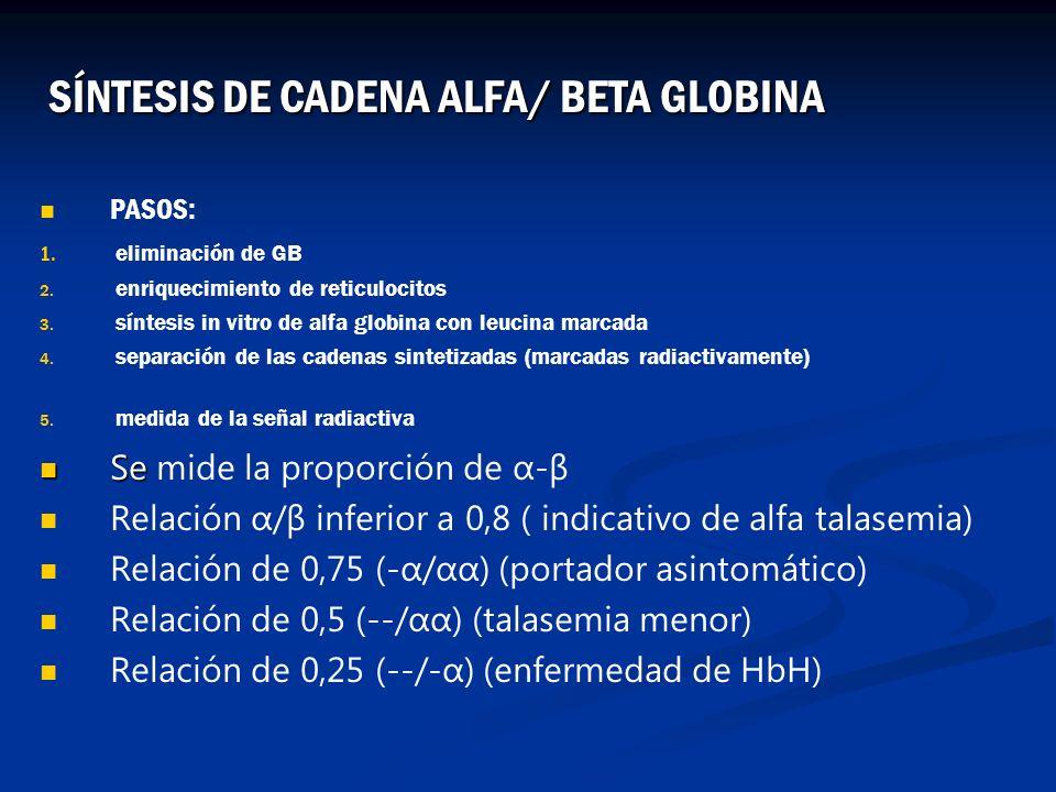SÍNTESIS DE CADENA ALFA/ BETA GLOBINA
