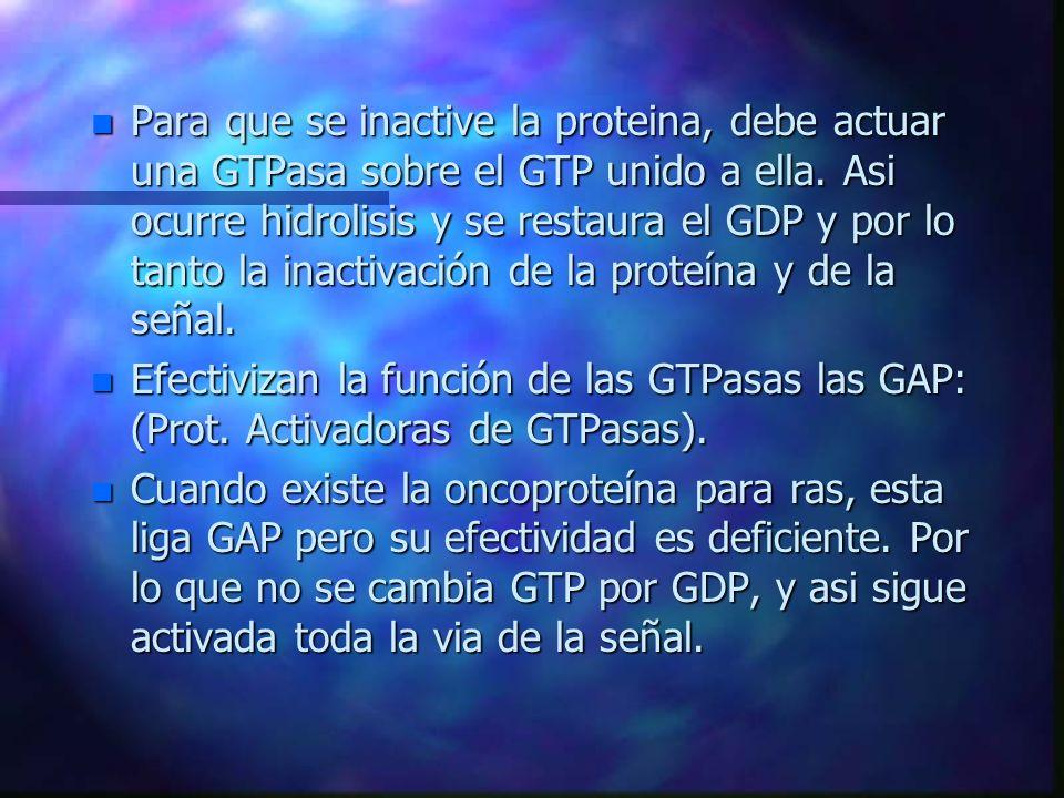 Para que se inactive la proteina, debe actuar una GTPasa sobre el GTP unido a ella. Asi ocurre hidrolisis y se restaura el GDP y por lo tanto la inactivación de la proteína y de la señal.