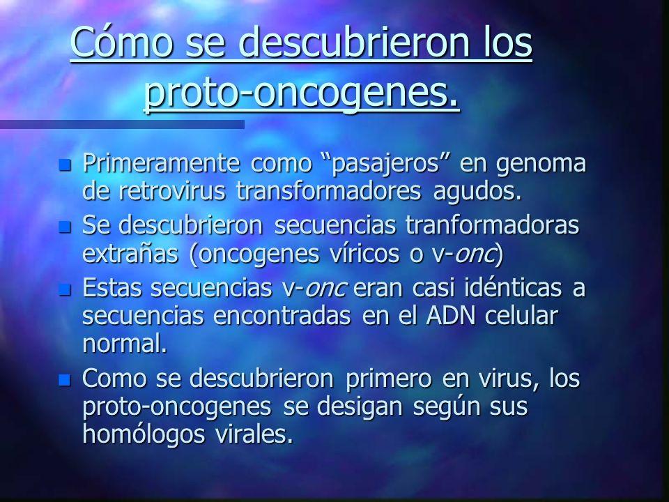Cómo se descubrieron los proto-oncogenes.