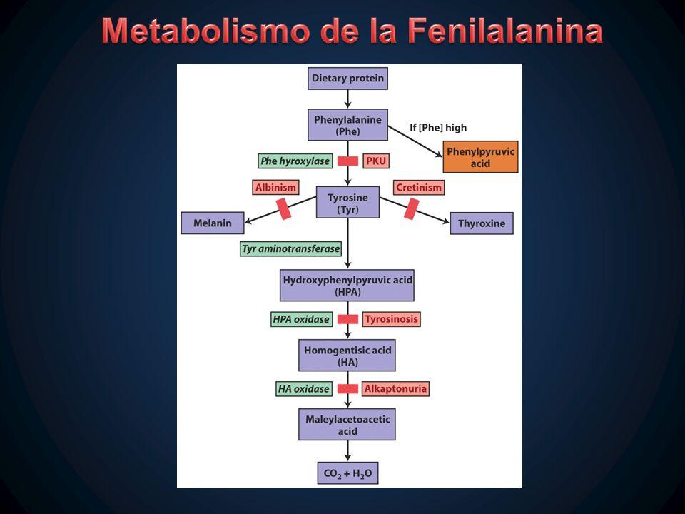 Metabolismo de la Fenilalanina