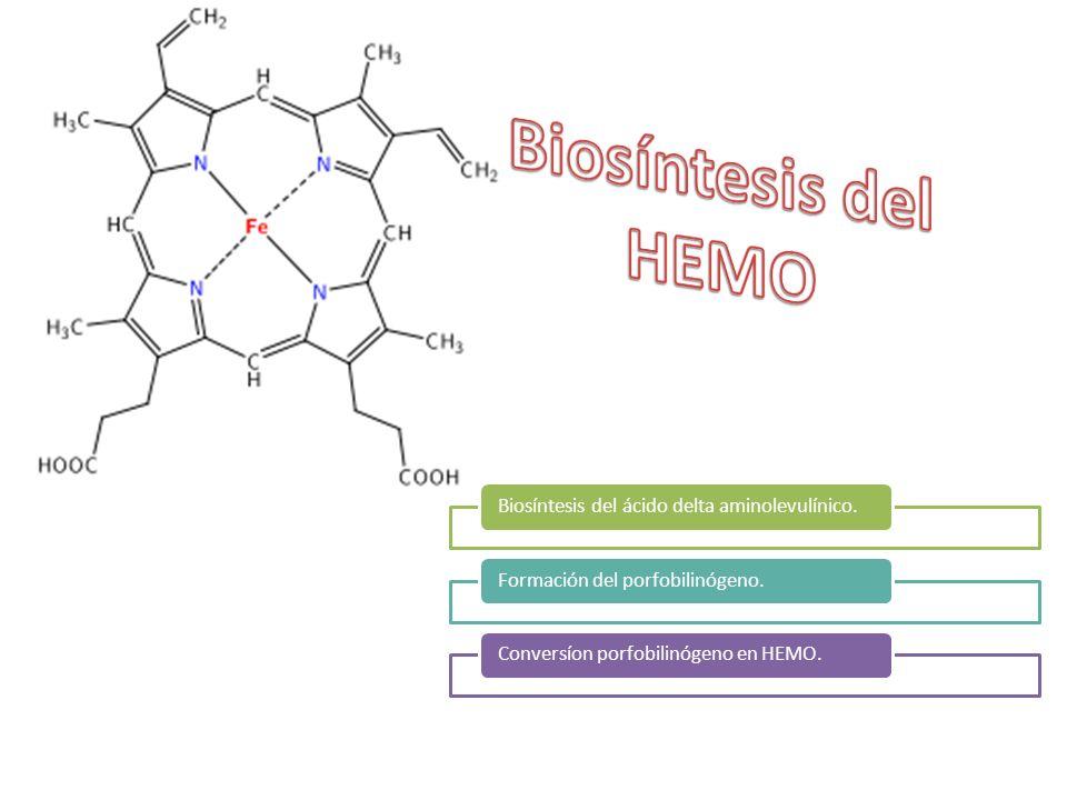 Biosíntesis del HEMO Biosíntesis del ácido delta aminolevulínico.