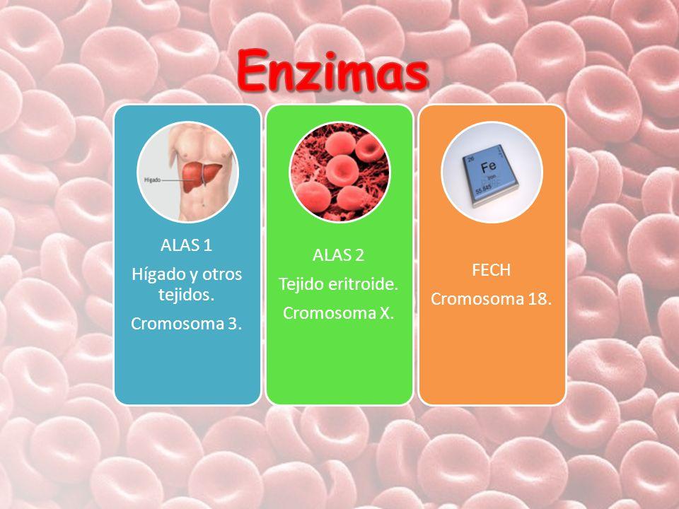 Enzimas ALAS 1 ALAS 2 Hígado y otros tejidos. FECH Tejido eritroide.