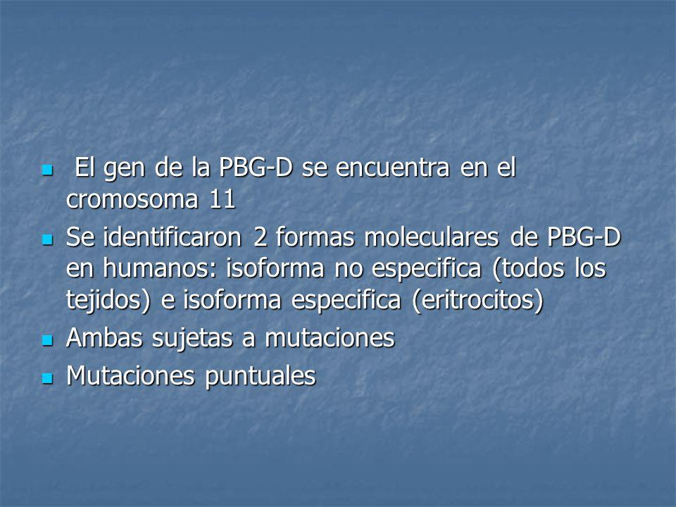 El gen de la PBG-D se encuentra en el cromosoma 11
