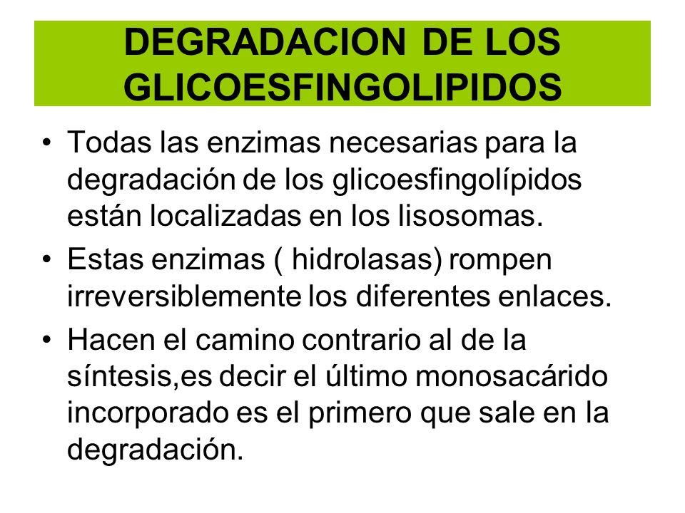 DEGRADACION DE LOS GLICOESFINGOLIPIDOS