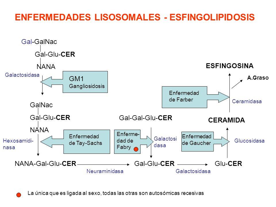ENFERMEDADES LISOSOMALES - ESFINGOLIPIDOSIS
