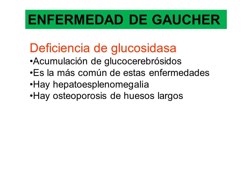 ENFERMEDAD DE GAUCHER Deficiencia de glucosidasa