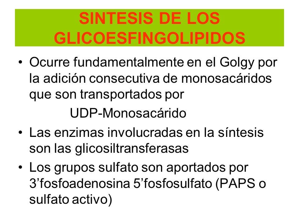 SINTESIS DE LOS GLICOESFINGOLIPIDOS