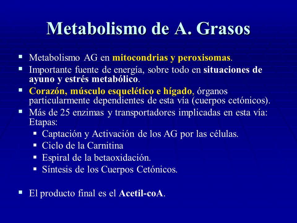 Metabolismo de A. Grasos