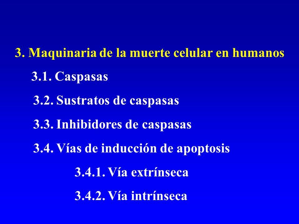 3. Maquinaria de la muerte celular en humanos