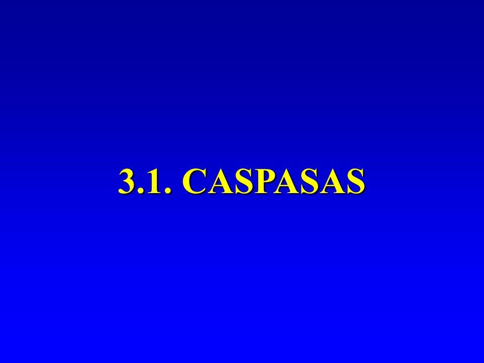 3.1. CASPASAS