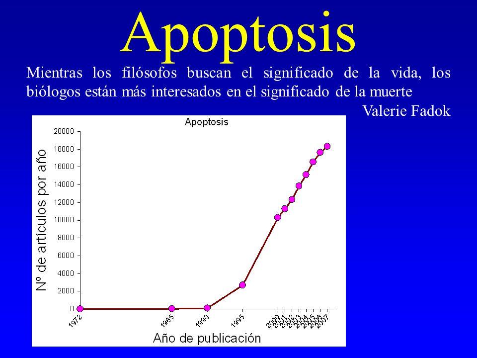 Apoptosis Mientras los filósofos buscan el significado de la vida, los biólogos están más interesados en el significado de la muerte.