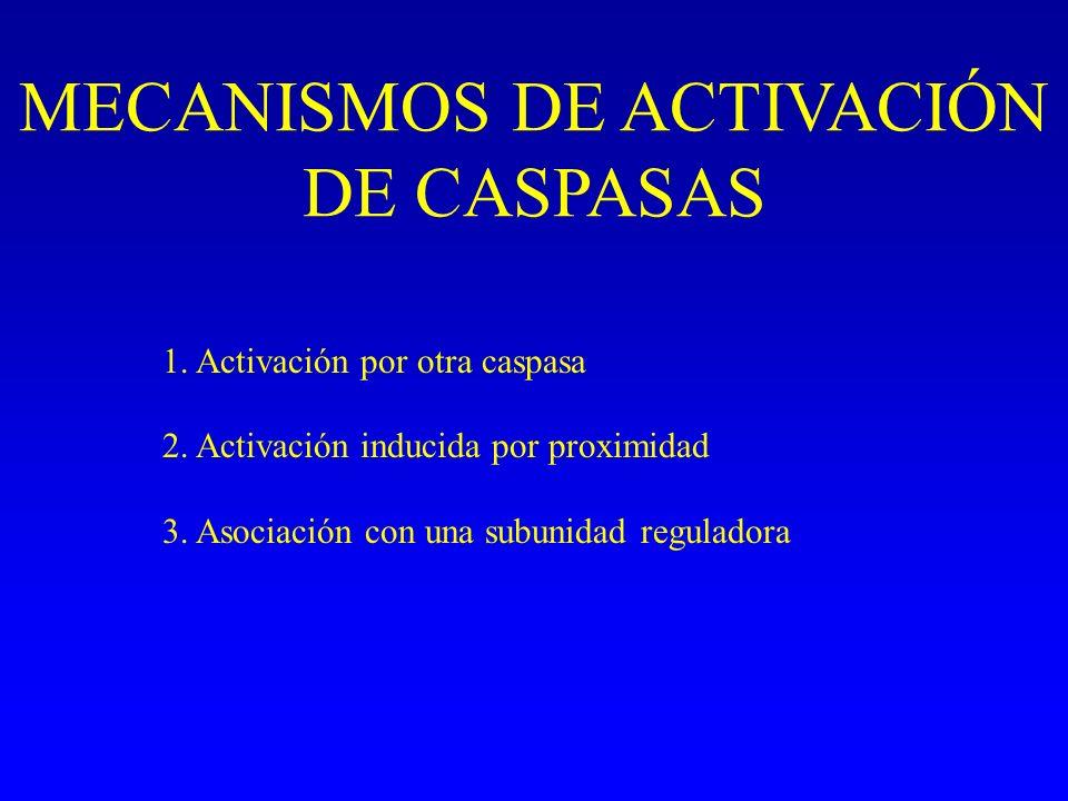 MECANISMOS DE ACTIVACIÓN DE CASPASAS