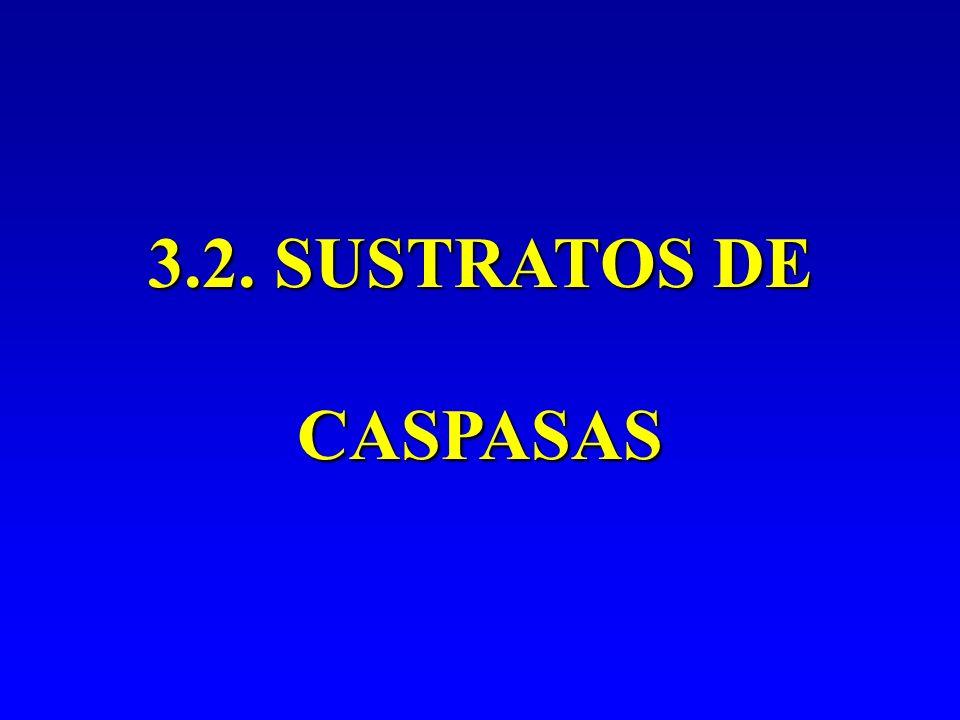 3.2. SUSTRATOS DE CASPASAS