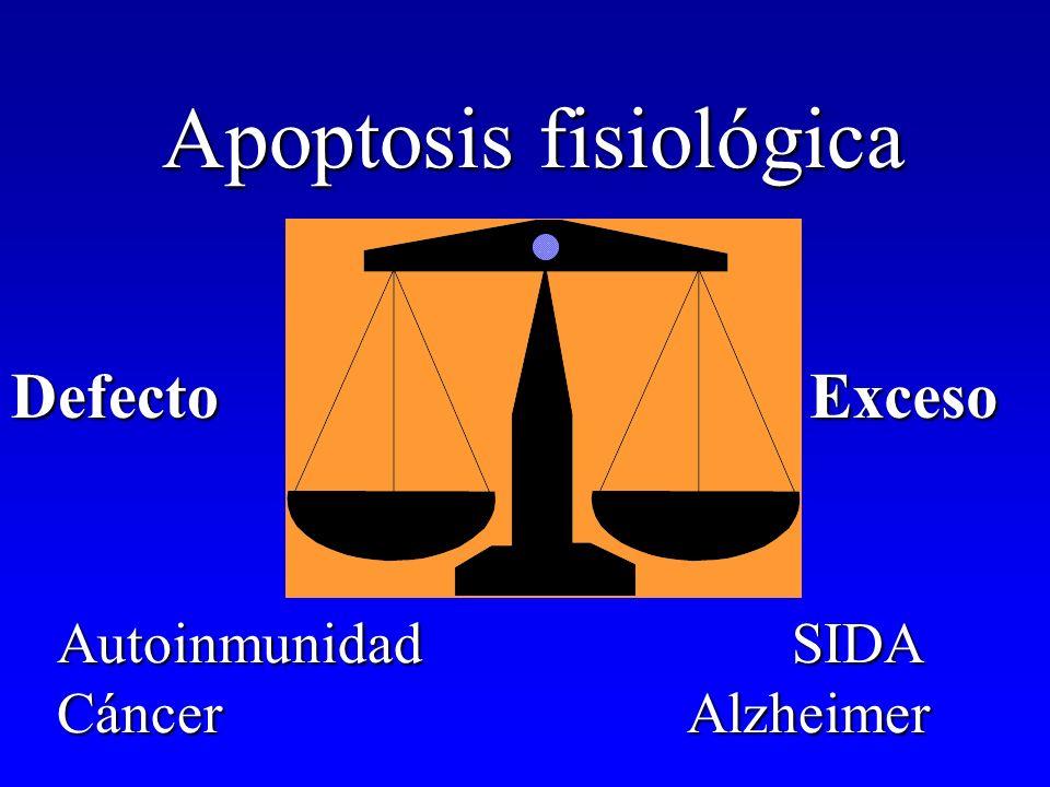 Apoptosis fisiológica