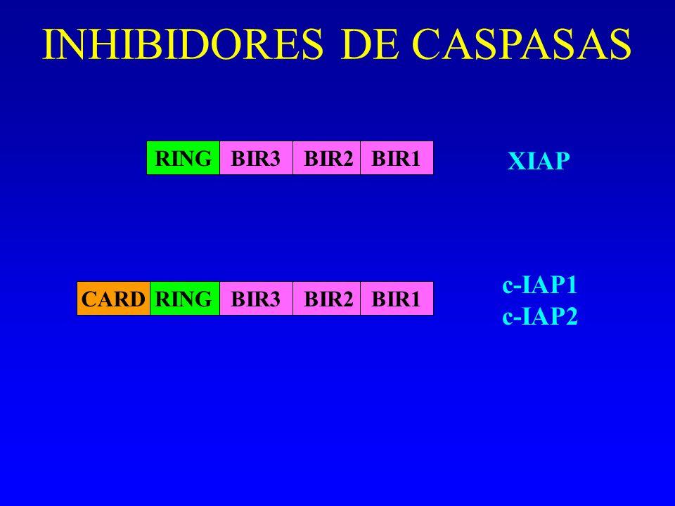 INHIBIDORES DE CASPASAS