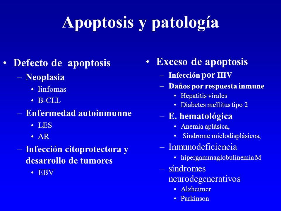 Apoptosis y patología Defecto de apoptosis Exceso de apoptosis