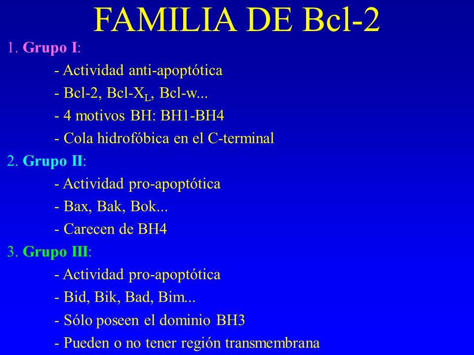 FAMILIA DE Bcl-2 1. Grupo I: - Actividad anti-apoptótica
