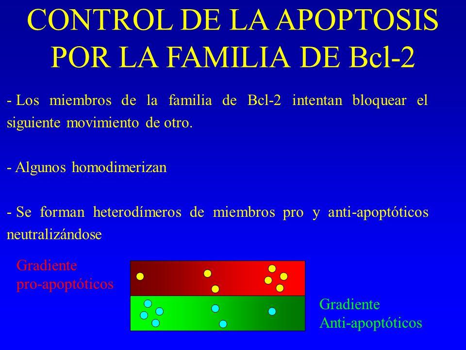 CONTROL DE LA APOPTOSIS POR LA FAMILIA DE Bcl-2