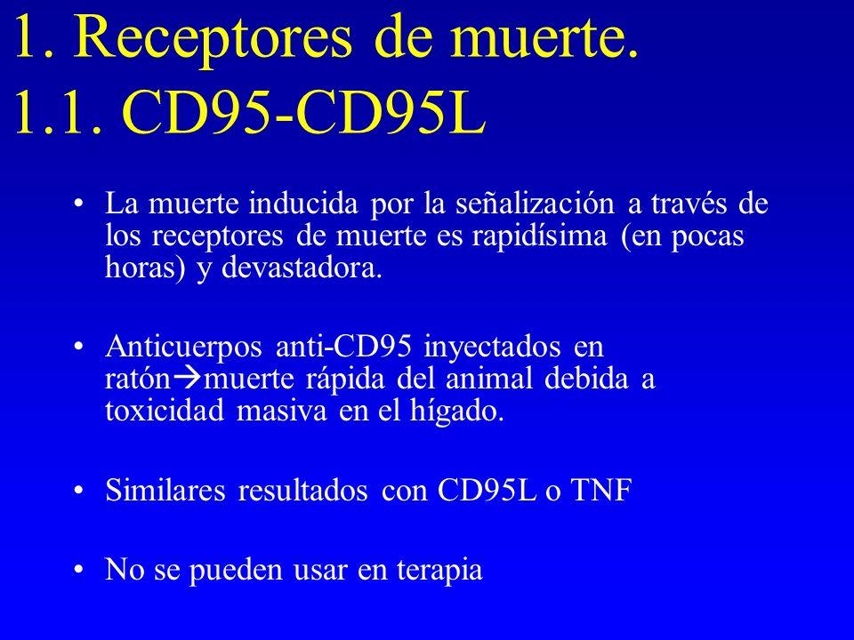 1. Receptores de muerte. 1.1. CD95-CD95L