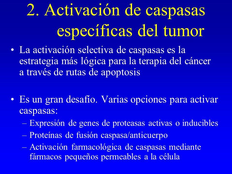 2. Activación de caspasas específicas del tumor