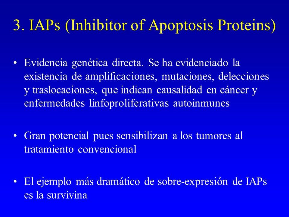 3. IAPs (Inhibitor of Apoptosis Proteins)