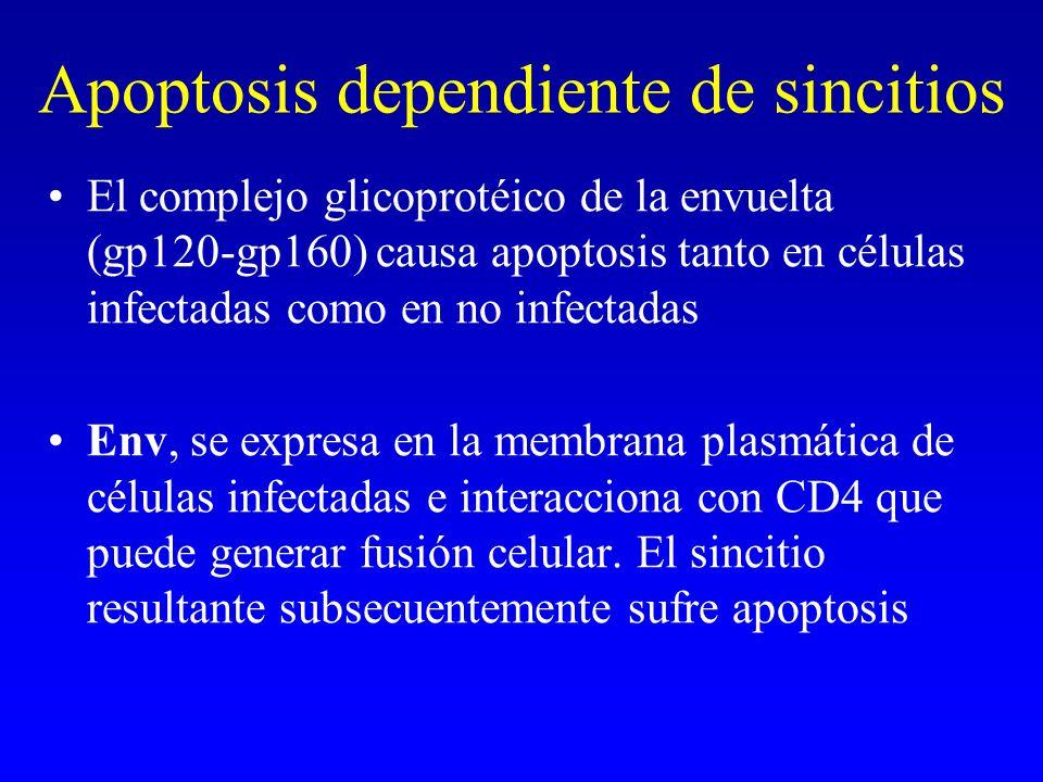 Apoptosis dependiente de sincitios