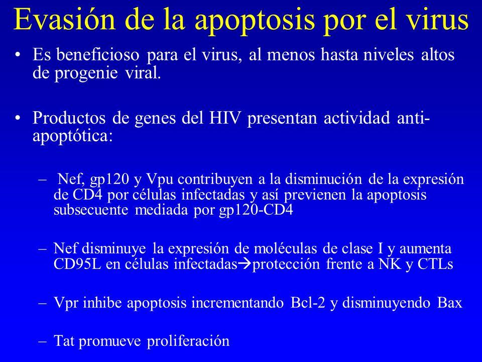 Evasión de la apoptosis por el virus