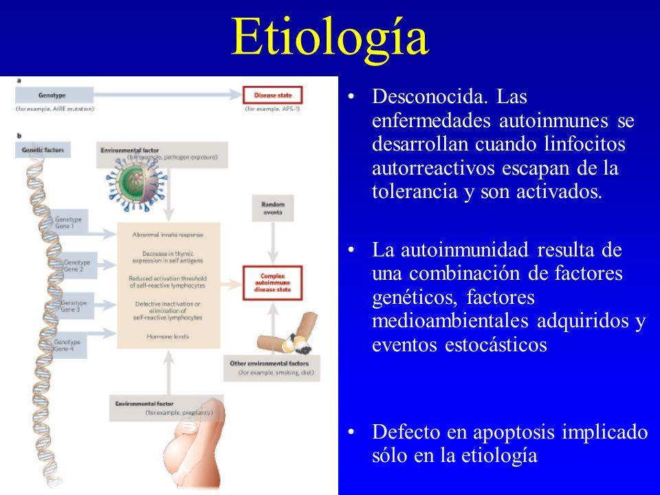 Etiología Desconocida. Las enfermedades autoinmunes se desarrollan cuando linfocitos autorreactivos escapan de la tolerancia y son activados.
