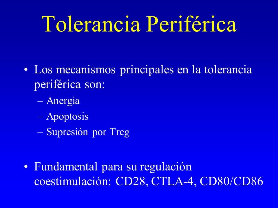 Tolerancia Periférica
