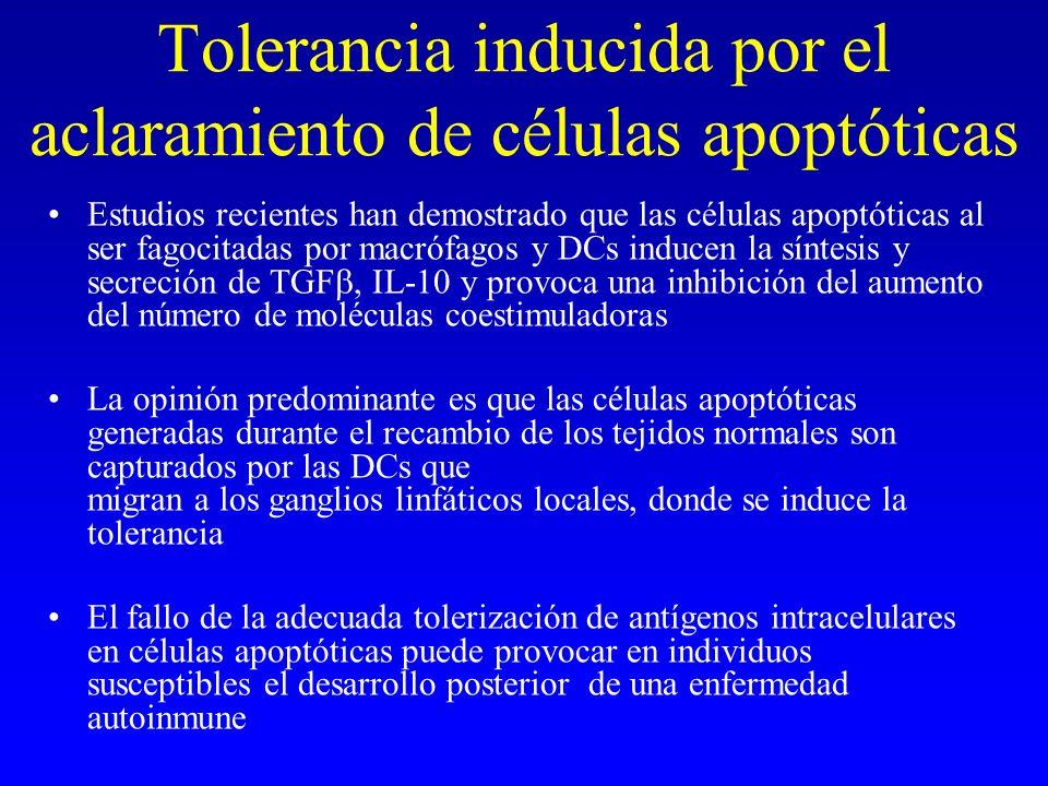 Tolerancia inducida por el aclaramiento de células apoptóticas