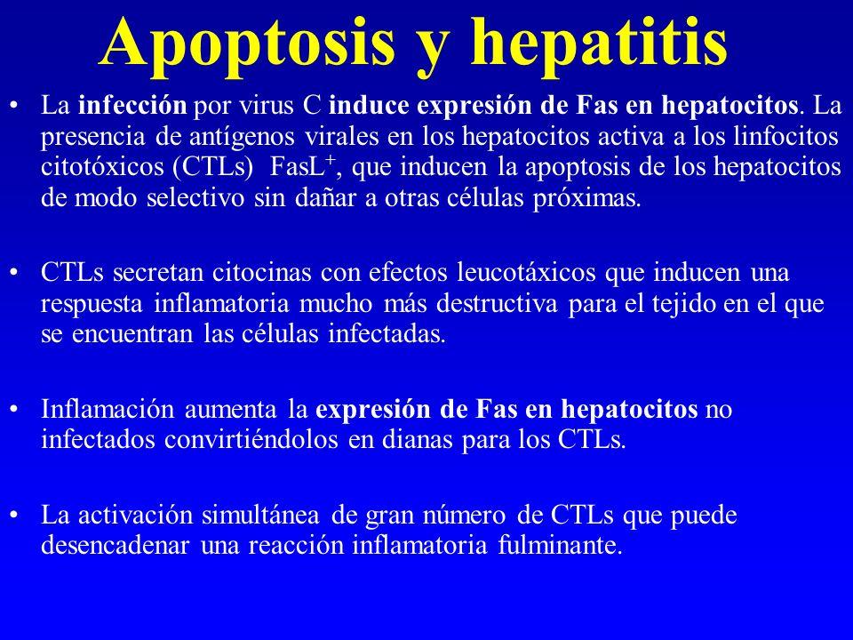 Apoptosis y hepatitis