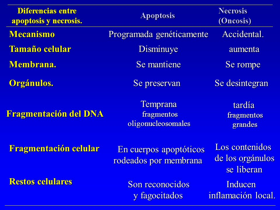 Programada genéticamente Accidental.