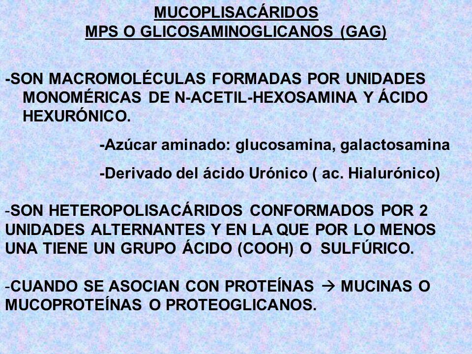 MPS O GLICOSAMINOGLICANOS (GAG)