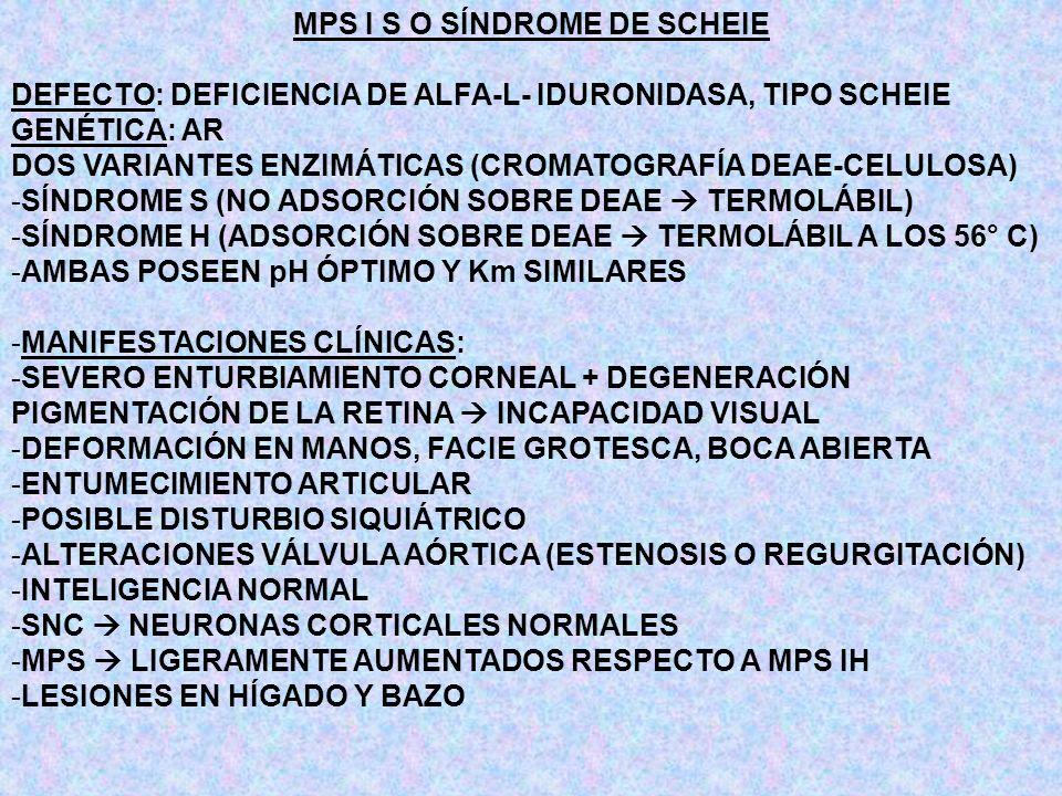 MPS I S O SÍNDROME DE SCHEIE