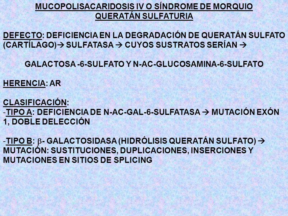 MUCOPOLISACARIDOSIS IV O SÍNDROME DE MORQUIO QUERATÁN SULFATURIA