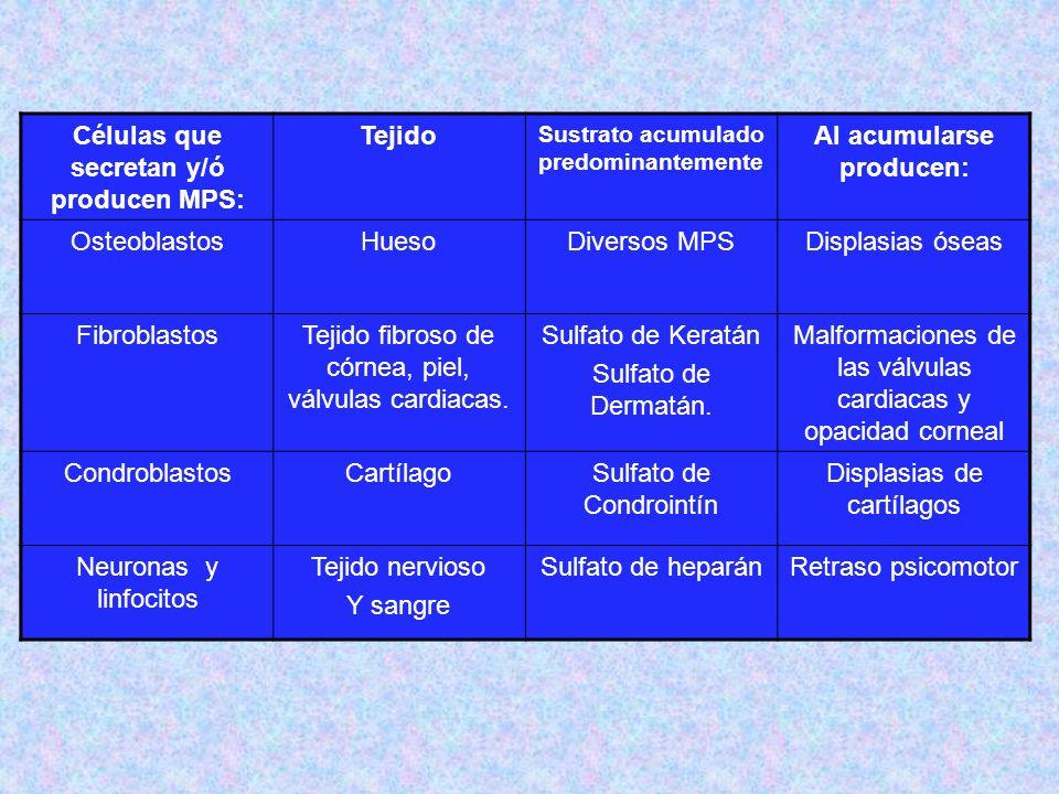 Células que secretan y/ó producen MPS: Tejido Al acumularse producen: