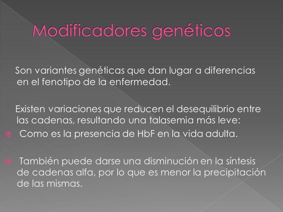 Modificadores genéticos